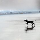 black dog by Zefira