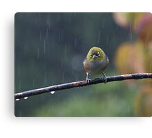 Raindrops keep falling on my head...........! Canvas Print