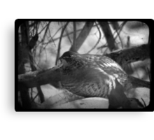The House of Grouse  Canvas Print