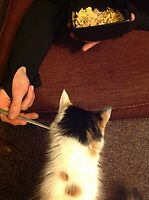 Sharing daddy cats cereal by Phatcat