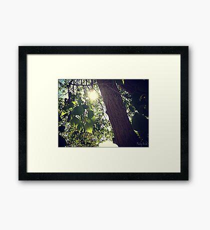 Among the Trees Framed Print
