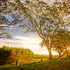 Dawsley, Adelaide Hills SA by Mark Richards