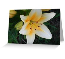 Yellow Lilie Greeting Card