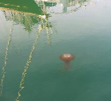Jellyfish in San Francisco Bay by David Denny