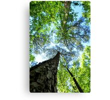 Trees at Cape Fear Canvas Print