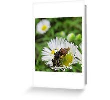 Breeding Ambush Bugs Greeting Card
