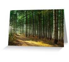 Forest Sun Rays Greeting Card