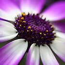 Senetti Macro by Astrid Ewing Photography