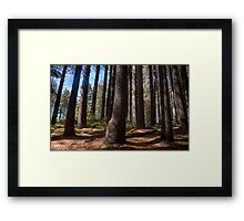 Cathedral #2 - Sugar Pine Walk Laurel Hill NSW - The HDR Experience Framed Print