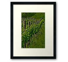 Vineyard III Framed Print