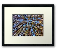 Reach For The Sky - Sugar Pine Walk Laurel Hill NSW - The HDR Experience Framed Print