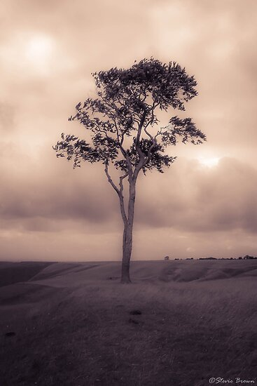 Tree (reworked) by Stevie B