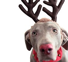 Rudolph the Red Nosed Reindeer? by Lesley Scott