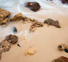 Rock Pig at Fingals Beach by Alex Fricke