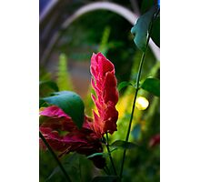 Spear Of Beauty Photographic Print