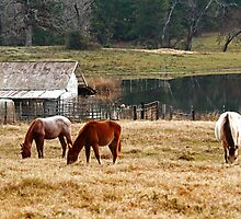 Winter Pasture by Janice Carter