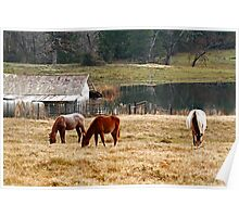 Winter Pasture Poster