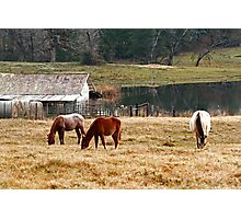 Winter Pasture Photographic Print