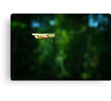 Hitchhiker on My Windshield Canvas Print