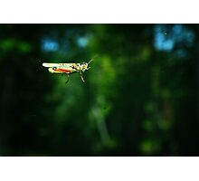 Hitchhiker on My Windshield Photographic Print