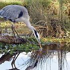 heron by Alan Forder