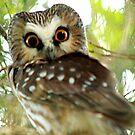 Owl Stares me Down by Jessie Miller/Lehto