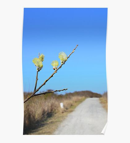 Hiking path along the coast  in spring  Poster