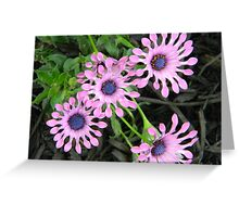 Flowers,purple Greeting Card