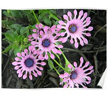 Flowers,purple Poster