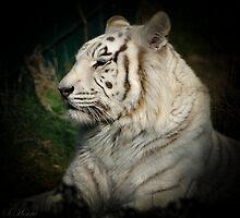 White Tiger by simonh2159