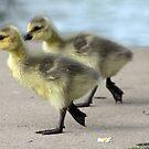 Walk like a Gosling by Kimberly Palmer