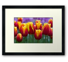 Colours!!!! Framed Print
