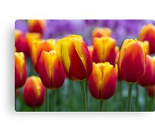 Colours!!!! Canvas Print