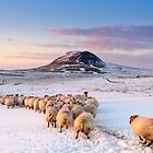 Slemish Mountain, County Antrim , Northern Ireland by Zdrojewski