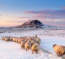 Slemish Mountain, County Antrim , Northern Ireland by Zdrojewski