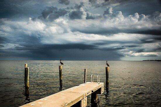 Pelican Pier St Petersburg by Casey Peel