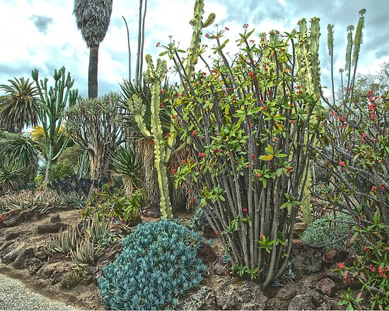 Cactus garden at the Huntington Library. by philw