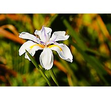 lily valley Photographic Print