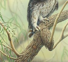 Barking Owl & Tiger Moth / 70 x 41cm, acrylic on board by Christopher Pope