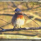 Bluebird Gone Postal by Caren