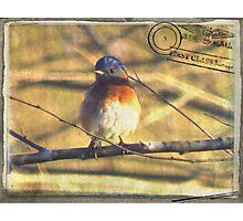 Bluebird Gone Postal Photographic Print