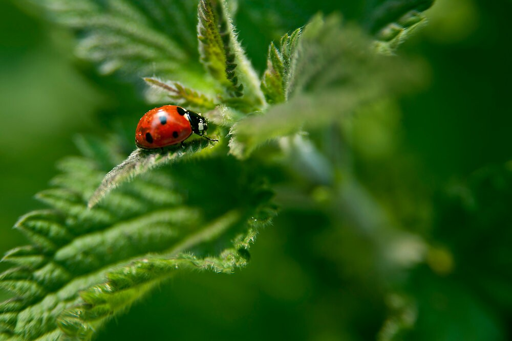 Ladybug on a mission by William  Monet