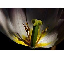 sunspotlight tulip tower Photographic Print