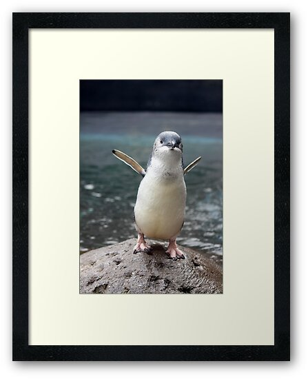 Little Blue Penguin by PerkyBeans