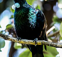 Tui by srhayward