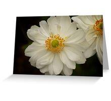 Macro Flower Greeting Card