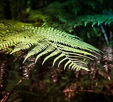 Fern by Russell Charters