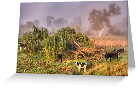 Oh No Not Another Photographer ! - Jingelic NSW - The HDR Experience by Philip Johnson