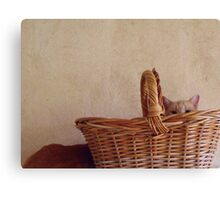 209/365 still life with cat(s) Canvas Print