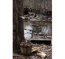 Old Fashioned Sugaring Photographic Print